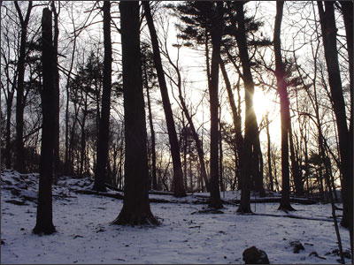 Winter Woods image